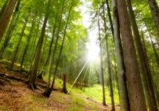 Haya y pinos de la visión inferior 2 Imagen de archivo