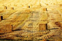 Haybail-Reihen auf Bauernhof Lizenzfreies Stockbild