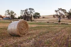 Haybails recientemente rodados en un campo en las colinas S de Adelaide Imagenes de archivo