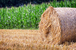 Haybale Royalty Free Stock Images