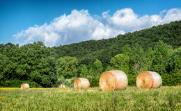 Haybale Stock Images