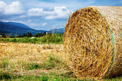 Haybale Stock Image