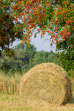 Haybale under rowan Stock Images