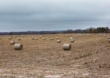 Haybales в поле Стоковое Изображение