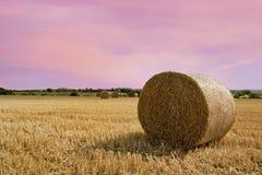 Haybales в поле Стоковое Фото