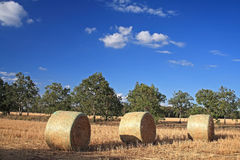 Haybales. Three haybales in a paddock in outback Australia with gum trees and blue sky Stock Photography