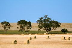 Haybales Royalty Free Stock Photo