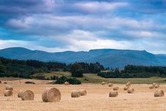 Haybales avec des pierres de Cairngorm à l'arrière-plan Image stock