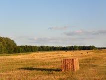 Haybales cuadrados en campo durante cosecha del verano Fotos de archivo libres de regalías