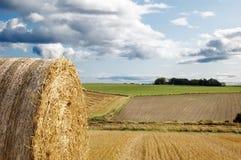 Haybales di agricoltura Immagini Stock Libere da Diritti