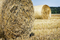 Haybales Stock Images