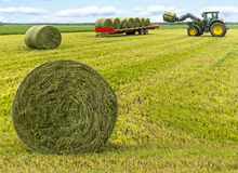 Haybales in field Royalty Free Stock Images