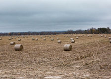 Haybales in a field Stock Image