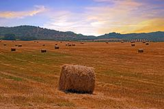 Haybales in the fields of Portugal at sunset Royalty Free Stock Photography