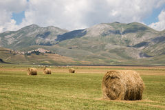Haybales Royalty Free Stock Image