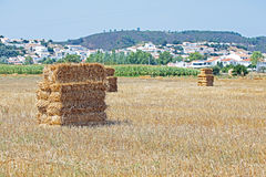 Haybales w polach blisko Aljezur Portugalia Zdjęcia Royalty Free