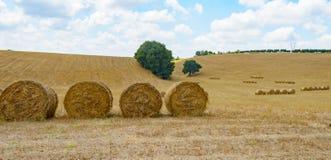 Hayball field Stock Image