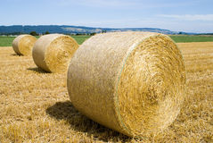 Hayballs. Harvest time on the country-side, hayballs to be transported to the farm yard Royalty Free Stock Photos