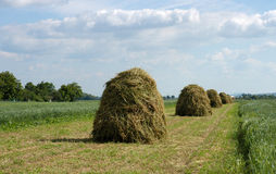 Haycock. On filed stock photo