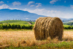 Free Haycock And Cypresses In Tuscany, Italy Stock Images - 41875574