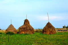 Haycock. Haystacks in the Apuseni Mountains. A group of traditional haystacks Royalty Free Stock Photo