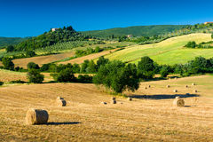 Haycock and trees in sunny tuscan countryside, Italy Stock Image