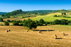 Haycock and trees in sunny tuscan countryside, Italy Royalty Free Stock Images