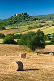 Haycock and trees in sunny tuscan countryside, Italy Stock Photos