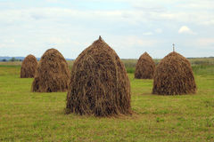 Haycocks are on the field. Making hay is on the meadows of Carpathians Stock Photography