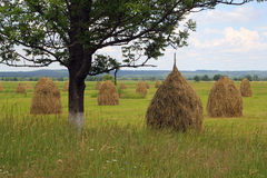 Haycocks are on the field. Making hay is on the meadows of Carpathians Royalty Free Stock Photos