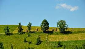 Haycocks are on the field. In the mountains, Carpathian Ukraine Royalty Free Stock Image