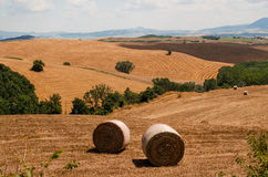 Haycocks on the field in Tuscany, Italy.  Stock Photo