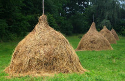 Haycocks. A hay is after the first haymaking Stock Photo