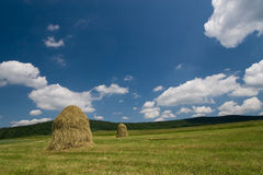 Free Haycocks On The Meadow Royalty Free Stock Photo - 2633315