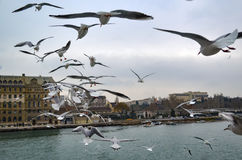 Haydarpasa, Near the pier with lots of seagulls flying. Royalty Free Stock Photos