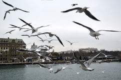 Haydarpasa, Near the pier with lots of seagulls flying. Stock Photography