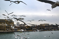 Haydarpasa, Near the pier with lots of seagulls flying. Stock Photos