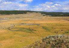 Hayden Valley. Yellowstone Park's Hayden Valley in fall dotted by buffalo Stock Image