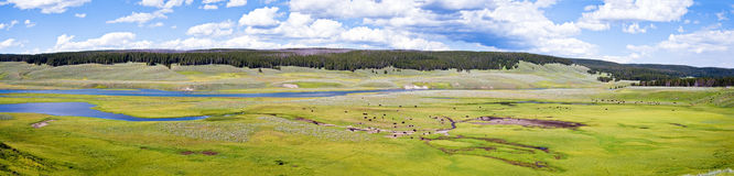 Hayden Valley. Panorama with bisons in the Hayden valley, Yellowstone National Park Royalty Free Stock Image