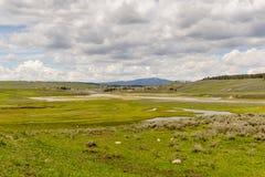 Hayden Valley i Yellowstone Arkivbilder