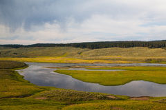 Hayden Valley - landscape of American Bison Royalty Free Stock Photo