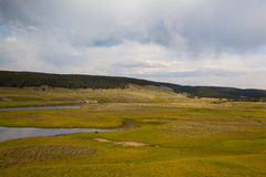 Hayden Valley - landscape of American Bison Royalty Free Stock Image