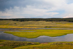 Hayden Valley - landscape of American Bison Royalty Free Stock Photography