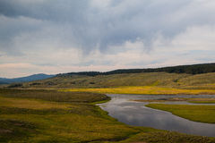 Hayden Valley - landscape of American Bison Stock Image