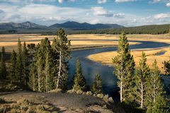 Hayden Valley View. Shot in Yellowstone National park in the Hayden valley Royalty Free Stock Photography