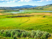 Hayden Valley Yellowstone Royalty Free Stock Photography