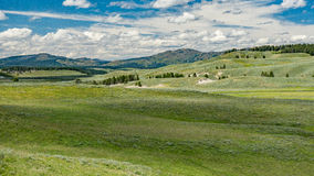 Hayden Valley in Yellowstone. Hayden Valley of Yellowstone National Park in summer Stock Photos