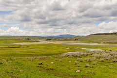 Hayden Valley in Yellowstone. Hayden Valley of Yellowstone National Park in summer. Unites States, Wyoming Stock Images
