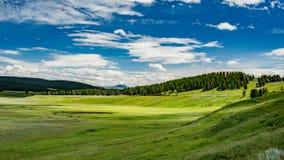 Hayden Valley Stock Image