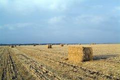 hayfield Израиль Стоковые Изображения RF